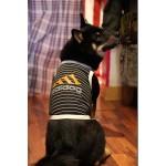 habits pour chien