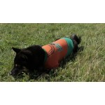 T-shirt chien orange