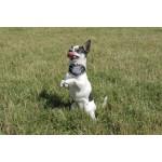 Bandana chien securite