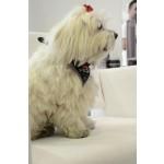 Foulard chien Pirate