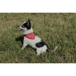 bandana western chien rouge