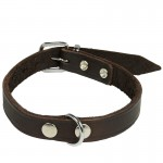 colliers pour chien