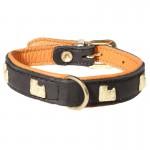 collier noir de chien