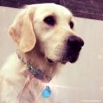 médaille_personnalisé_chien_keep_calm_fashion_bleu_ciel